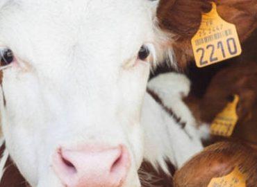 Dirty COW – Neue Kernel-Sicherheitslücke